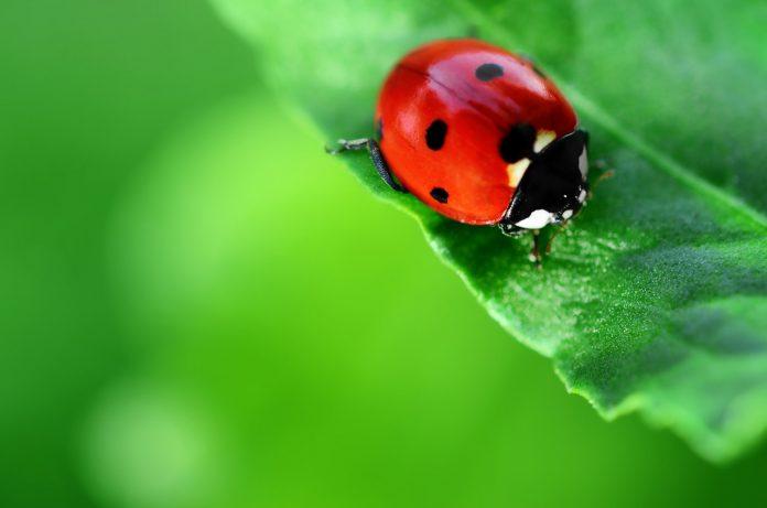 Khám phá đặc điểm côn trùng tại Western North Carolina